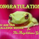 Challenge Banner Amphibians group by robmac