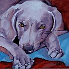 Weimaraner 2 by pattiejo