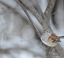 Snowing again! by Jeannine St-Amour