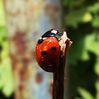 Ladybird by misterpep