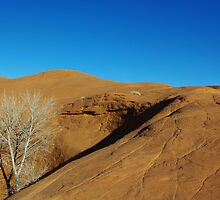 Orange rock hill with white dry tree and shadow by Claudio Del Luongo