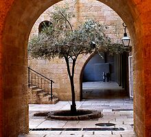 An Olive Tree Grows In Jerusalem by Mary Ellen Garcia