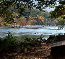 Mountain Fork Park...From The Trees by Carolyn  Fletcher