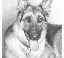 German shepherd drawing by Mike Theuer