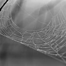Lonely Web by Dawne Dunton