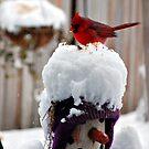 Always Feed the Birds by Grinch/R. Pross