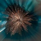 ZOOM BURST FLOWER by GillianSweeney