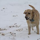Yellow Lab in the Snow by mommasab