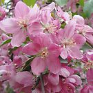 paradise apple blossom by AAA-Ace