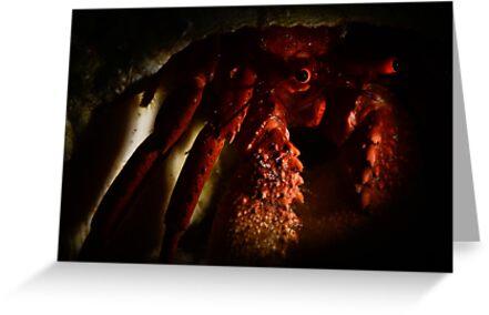 Hermit Crab by MattTworkowski