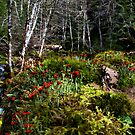 Cladonia ochrochlora by Charles & Patricia   Harkins ~ Picture Oregon