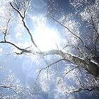 Winter Flare by andrewjloftis
