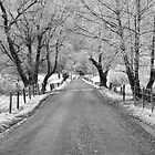 Frosty Sparks Lane by photodug
