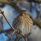 Winter Bird 2 by Jeff Ashworth & Pat DeLeenheer