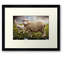 Snowy Sheep Framed Print