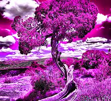 Twisted Juniper in Pink by Steven Kosek