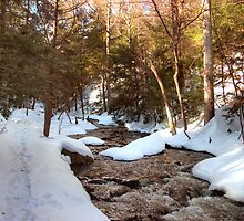 Snowy Trail Along Kitchen Creek by Gene Walls