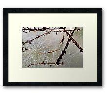 Maze Of Dew Drops Framed Print