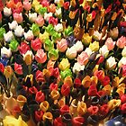 Cluster of Tulips by jjnascar