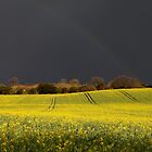 Rainbow over a golden field by Gary Richardson