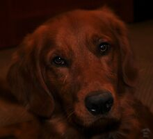 """ Riley "" View large please ! by CanyonWind"
