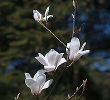 White magnolia iPad case by Oleksii Rybakov