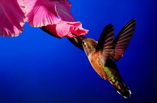 HUMMINGBIRD DELIGHT by RoseMarie747