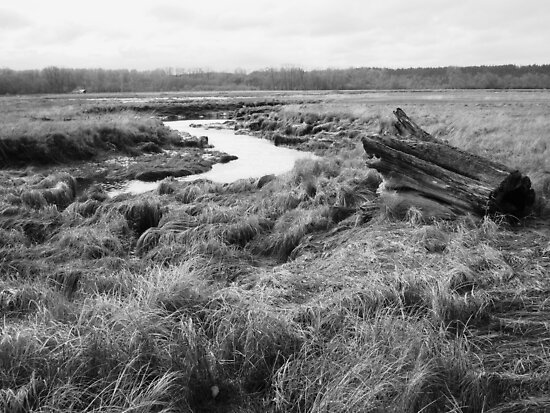 Nisqually Tidal Valley by Michael Rhodes