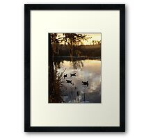 MUSCOVY DRAKES ON ECONFINA CREEK Framed Print