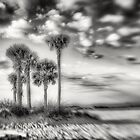 Five Palms by Kevin Abel Photography