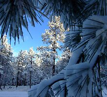 Snow Pines by Alex Rentzis