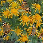 Butterflies and More by Alex Rentzis