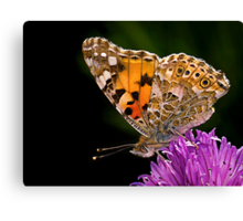 Butterfly - Vanessa Cardui Canvas Print