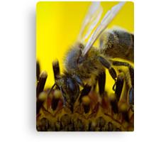 Bee on Sunflower Canvas Print