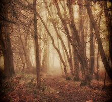 Enchanted Forest by Tim Waters