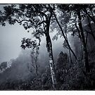 Forest in the fog by naphotos