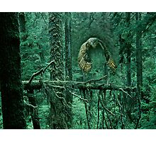 Owl Out of Green Forest Photographic Print