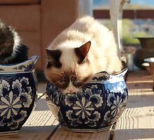 Potted Grump - Grumpy Cat and Pokey by Grumpy Cat