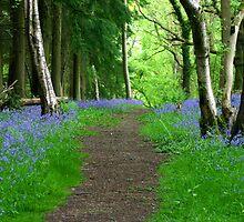 Bluebell Wood by Lisa  Baker-Richardson