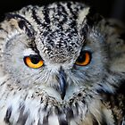 Owl by Paul Knowles