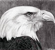Bald Eagle Bird Poster, Print & Card by Oldetimemercan