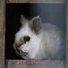 Fuzzy Bunny by Estell