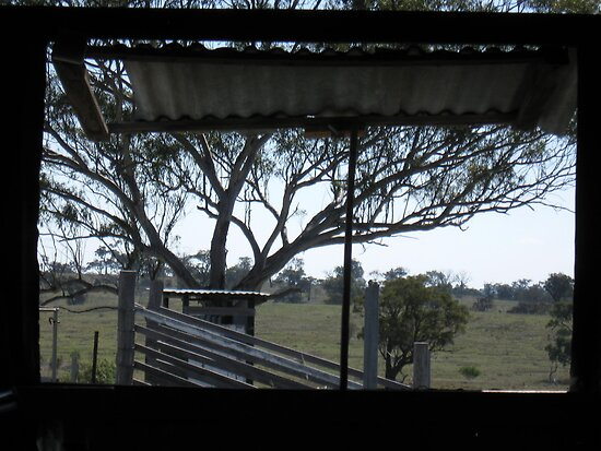 Through the Woolshed Window by Judy Woodman