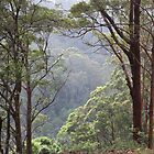 Australian Bush, Tallebudgera Valley, SE QLD. by aussiebushstick