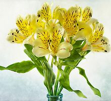 Peruvian Lilies by Jacky Parker