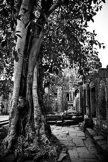 Cambodia Noir - Temple Nature by Tyson Battersby