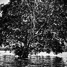 Cambodia Noir - Water Tree by Tyson Battersby