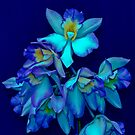 Blue Orchid by Thomas Barker-Detwiler