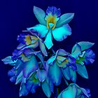 Blue Orchid by Thomas Barker