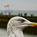 Sammy Seagull by Danny  Young